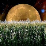 September's Full Moon - The Full Harvest Moon - Crops