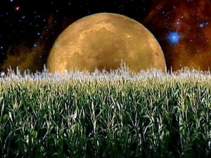 September's Full Moon - The Full Harvest Moon